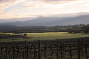 vineyard-1057635-1279x852